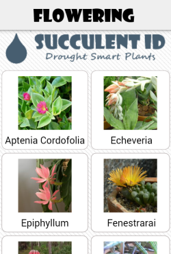 Succulent ID flowering plants page