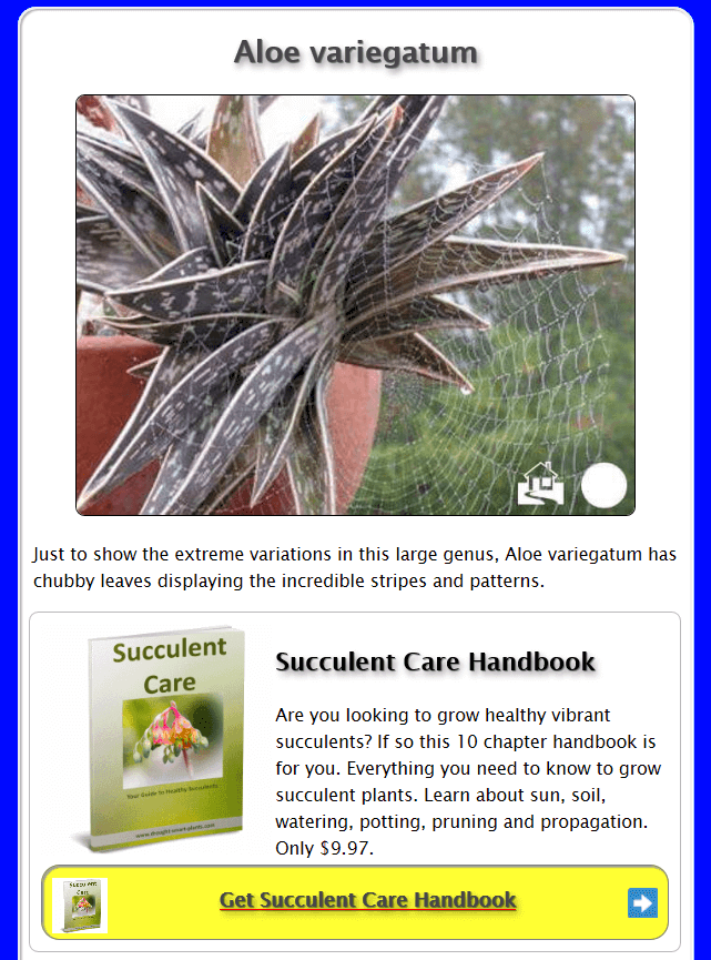 Aloe variegatum page