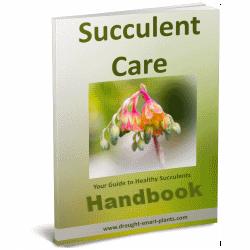 Succulent Plant Care Handbook
