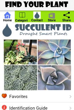 Succulentid Home Page